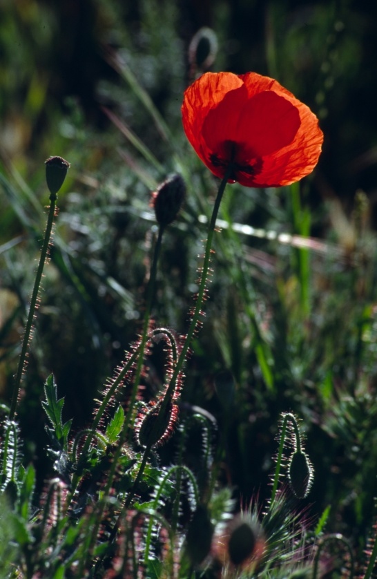 4.2 espana Cuenca Flor